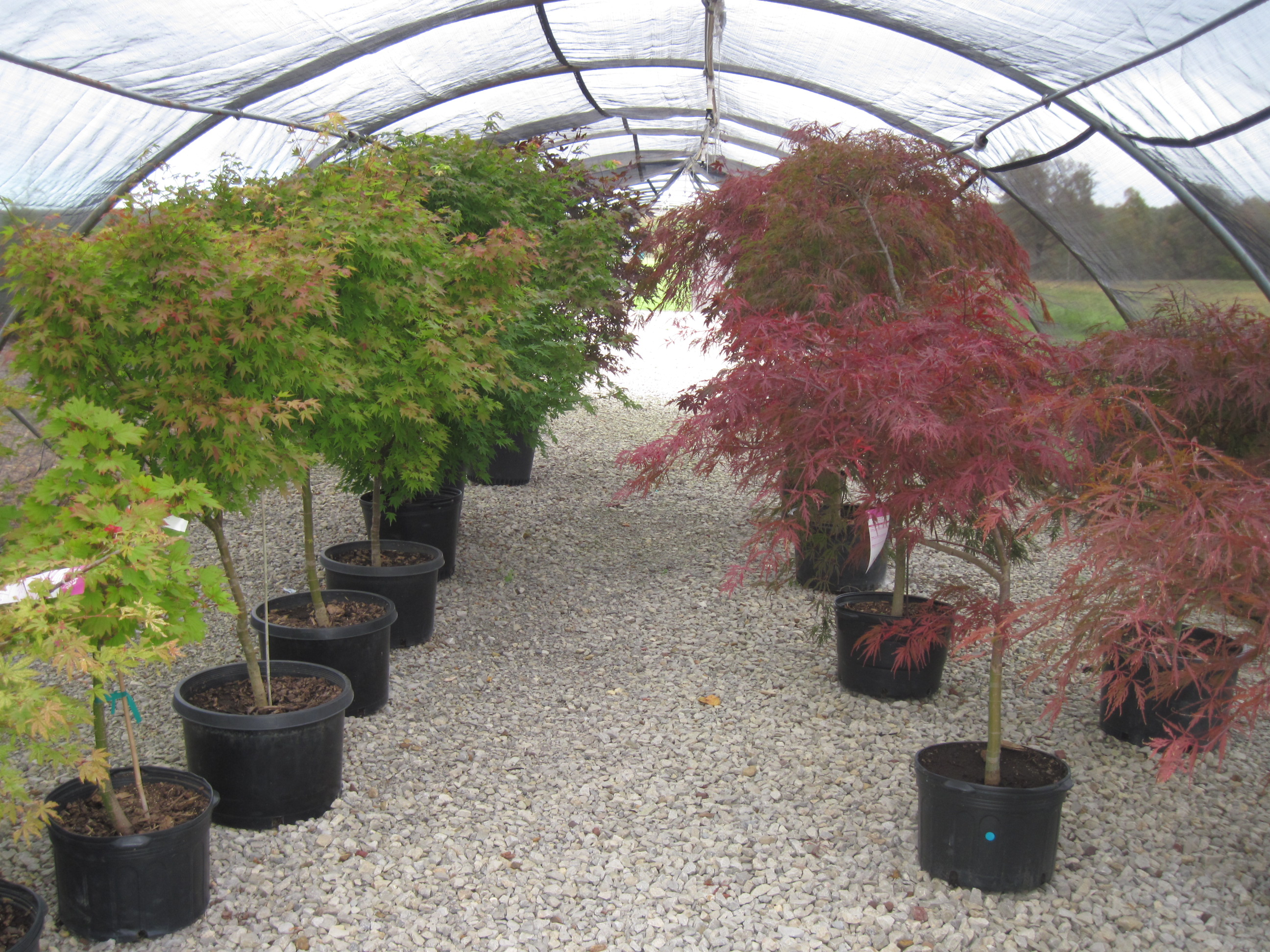 Fruit Shade And Ornamental Trees For In Clarion County Pa